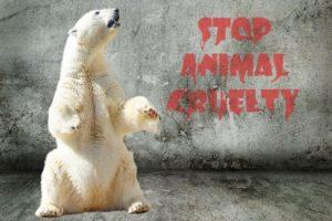 Stop alle crudeltà sugli animali