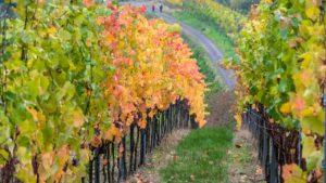 L'agricolutra biodinamica in Italia