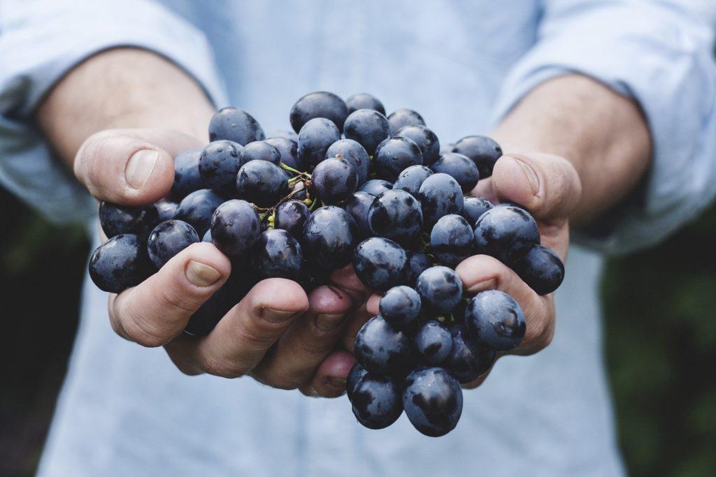 Il vino bio nel 2017 è cresciuto solo del 2%