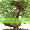 """10 motivi per essere """"Green"""""""