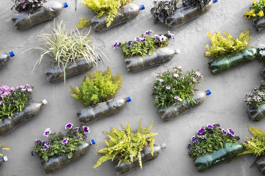 Vecchie bottiglie di plastica, non buttarle, riciclale e falle diventare dei vasi per i fiori