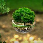Bioplastiche: materiali 100% biodegradabili