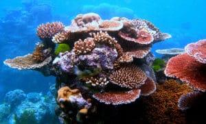 barriera corallina australiana