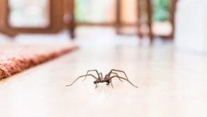 rimedi naturali casa a prova di insetti