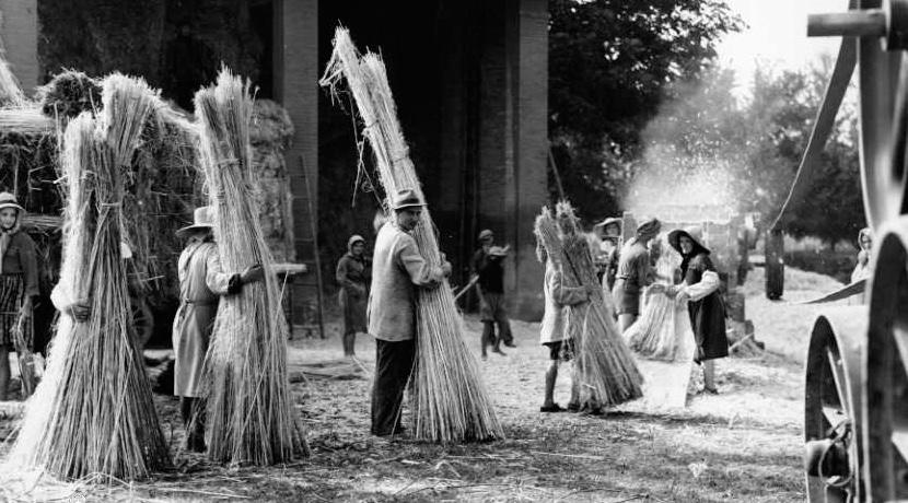 coltivatori di canapa in italia prima che fosse vietato il commercio di piante canapine