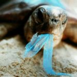 inquinamento plastica animali