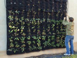 giardino verticale da parete