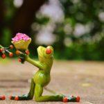 Regalare fiori partendo dal loro significato