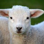 Ricette per un pranzo di Pasqua senza agnello