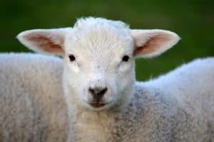 Pranzo di Pasqua senza mangiare agnello: l'alternativa è un menu vegetariano