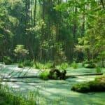 La Corte di Giustizia Europea salva la foresta di Białowieża