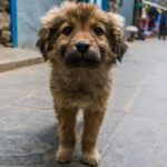 Abbandonare un cane o altri animali: cosa si rischia?