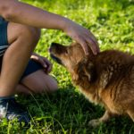 La Pet Therapy con cani e altri animali