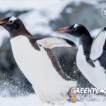 Calendario Greenpeace 2019: 12 scatti unici per raccontare il pianeta
