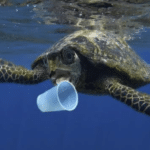 Comuni e istituzioni plastic free una sfida possibile