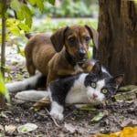 Rimedi naturali contro le pulci di cani e gatti