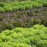 Il valore ecologico dell'orto