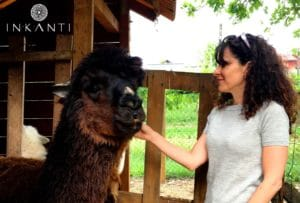 Dal Perù il tessuto naturale di Alpaca