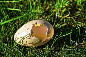 Gusci d'uova come concime naturale