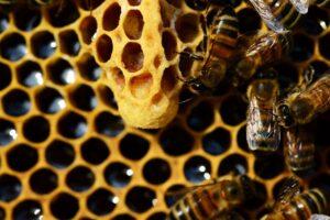 candela con cera d'api