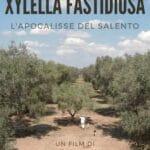 La Xylella e l'apocalisse degli olivi salentini: un film denuncia